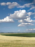 Céu azul de campo de trigo Imagens de Stock Royalty Free