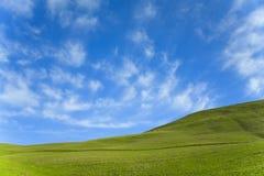 Céu azul de grama verde Fotos de Stock