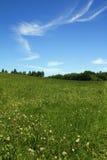 Céu azul de grama verde com nuvens Foto de Stock Royalty Free