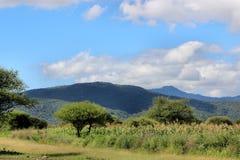 Céu azul de montes verdes Imagens de Stock Royalty Free