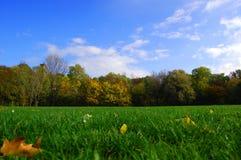 Céu azul do der outonal do un da floresta fotos de stock