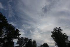 Céu azul do dia com folha das partes superiores da árvore que olham acima foto de stock