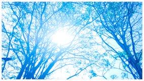 Céu azul do inverno fotos de stock royalty free