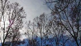 Céu azul do inverno Fotografia de Stock Royalty Free