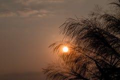Céu azul do nascer do sol, da beleza da flor do cana-de-açúcar e nuvens foto de stock royalty free