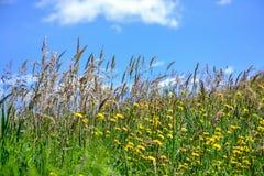 Céu azul do prado e do espaço livre fotos de stock