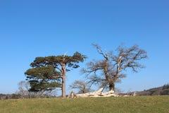 Céu azul e árvore Fotografia de Stock