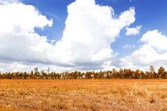 Céu azul e árvore seca Fotografia de Stock Royalty Free