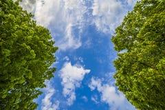Céu azul e árvores verdes luxúrias Fotografia de Stock Royalty Free