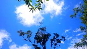 Céu azul e copas de árvore video estoque