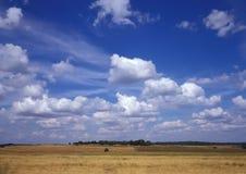 Céu azul e grão amarela Imagem de Stock Royalty Free