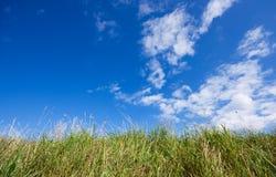 Céu azul e grama fotografia de stock