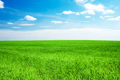 Céu azul e grama verde Fotografia de Stock