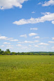 Céu azul e grama verde Fotos de Stock Royalty Free