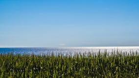 Céu azul e mar Báltico e campo de trigo fotos de stock