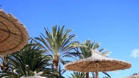 Céu azul e muitas palmas com o guarda-chuva em Fuerteventura video estoque
