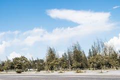 Céu azul e nuvem com árvore Imagens de Stock
