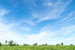 Céu azul e nuvem com árvore Fotografia de Stock Royalty Free