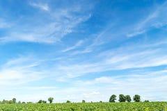 Céu azul e nuvem com árvore Imagem de Stock Royalty Free