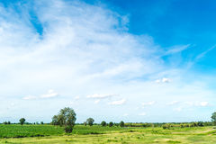 Céu azul e nuvem com árvore Fotos de Stock
