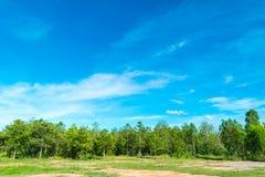 Céu azul e nuvem com árvore Fotografia de Stock