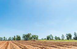 Céu azul e nuvem com árvore Imagens de Stock Royalty Free