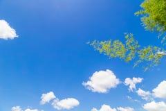 Céu azul e nuvem com ramo de bambu Fotos de Stock Royalty Free