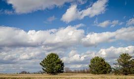 Céu azul e nuvens e as árvores Imagem de Stock