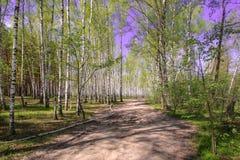 Céu azul ensolarado bonito da floresta brilhante mágica do sol da mola Fotografia de Stock Royalty Free