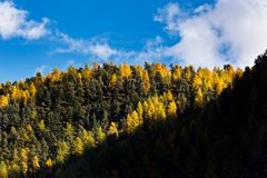 Céu azul, folhas em mudança e sombra no outono perto de Matterhorn, Zermatt, Suíça fotos de stock