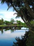 Céu azul na exploração agrícola do crocodilo de Miri, Bornéu, Malaysia Foto de Stock