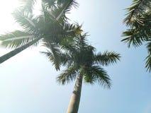 Céu azul, nuvens brancas, e palmeiras imagens de stock royalty free