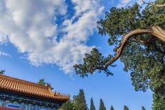 Céu azul, parque de Zhongshan Foto de Stock
