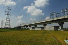 Céu azul Railway e campos dourados do arroz Imagem de Stock