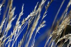 Céu azul sobre gramas Fotos de Stock Royalty Free