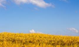 Céu azul sobre o campo Foto de Stock
