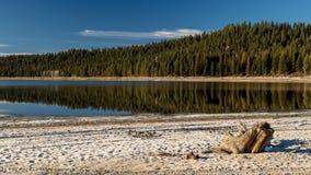 Céu azul sobre um lago da montanha alta no inverno com um coto de árvore o fotos de stock