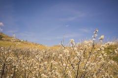 Céu azul sobre Wildflowers Foto de Stock