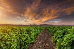 Céu bonito do por do sol sobre um vinhedo nas montanhas Foto de Stock Royalty Free
