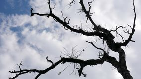 Céu brilhante através das sombras de madeira bonitas foto de stock