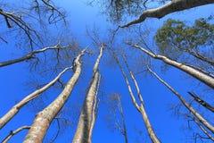 Céu claro nas florestas imagens de stock royalty free