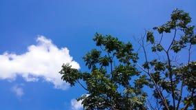 Céu com árvore Fotografia de Stock Royalty Free