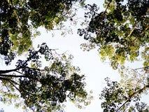 Céu com árvores Fotos de Stock Royalty Free