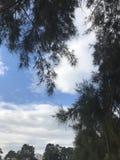 Céu com árvores imagens de stock royalty free