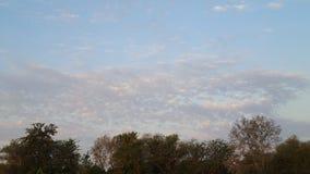 Céu com nuvens e árvores abaixo Fotos de Stock