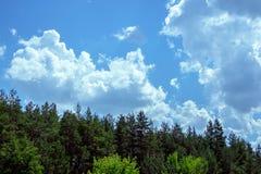 Céu com nuvens e as partes superiores da floresta conífera Imagem de Stock