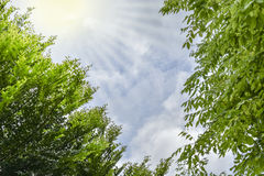 Céu com nuvens e backgroung verde da folha Imagem de Stock