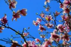 Céu cor-de-rosa e azul Imagens de Stock Royalty Free