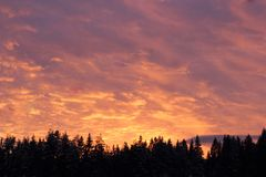 Céu cor-de-rosa sobre os abetos Imagens de Stock Royalty Free