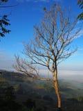 Céu da árvore Imagem de Stock Royalty Free